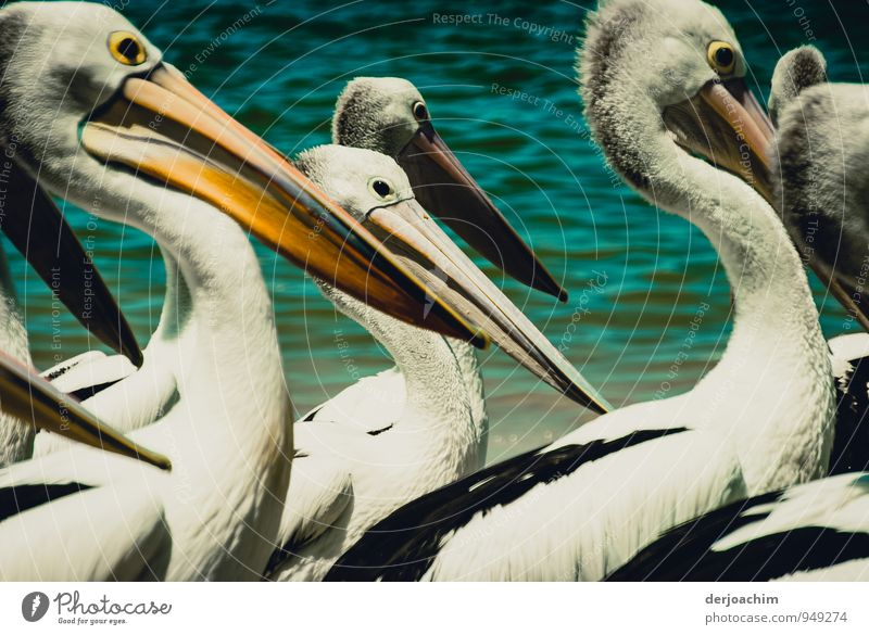 Mittendrin Ferien & Urlaub & Reisen weiß Wasser Sommer Meer Freude Strand Umwelt gelb lustig außergewöhnlich Freizeit & Hobby Lächeln genießen Tiergruppe beobachten