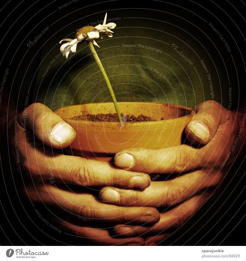 Hope Blume Blüte Blumentopf Topf Hand geschlossen Finger Wurstfinger Gartenarbeit Reifezeit Hoffnung Religion & Glaube Erde festhalten Wärme Wachstum