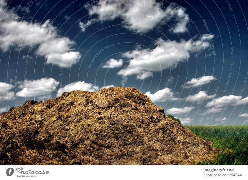 gold Länder Wolken Misthaufen Feld Wiese grün Landschaft country field clouds blau