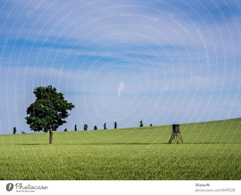 Feld Umwelt Natur Landschaft Himmel Wolken Sommer Schönes Wetter Pflanze Baum Nutzpflanze blau grün weiß Sachsen Schweiz Hochsitz Wellenform Farbfoto