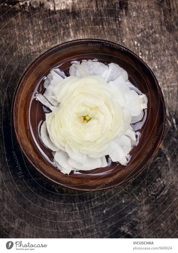 Weiße Blume in brauner Holz Schale mit Wasser Natur Pflanze weiß Erholung gelb Innenarchitektur Stil Wohnung Freizeit & Hobby Dekoration & Verzierung Design