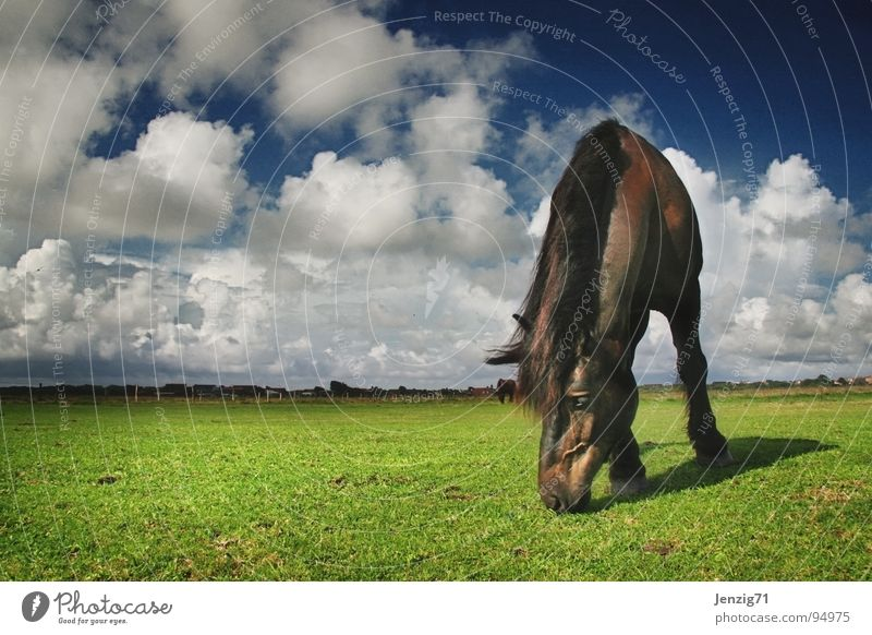 Rasenmäher No.2 Himmel Wolken Wiese Gras Wetter Pferd Insel Weide Säugetier Norden Langeoog