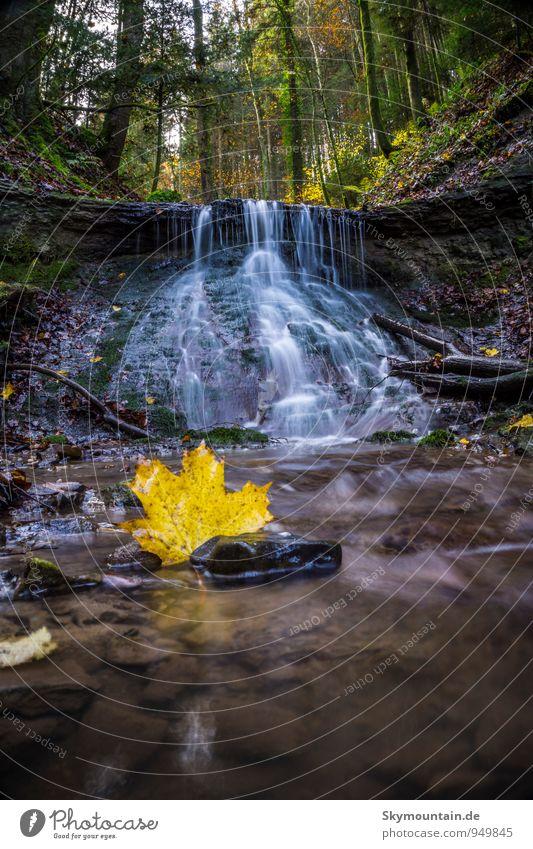 Ahornblatt vor Wasserfall Natur Landschaft Pflanze Tier Erde Wassertropfen Herbst Schönes Wetter Baum Moos Blatt Wald Urwald Felsen Bach Fluss Gummistiefel