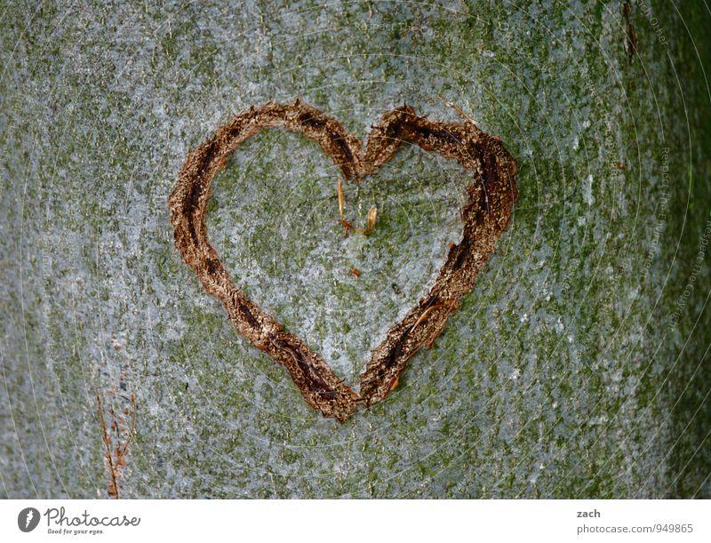 Spenderorgan... Valentinstag Hochzeit Pflanze Baum Baumstamm Baumrinde Holz Zeichen Ornament Herz Liebe Kitsch grau Gefühle Glück Sympathie Verliebtheit