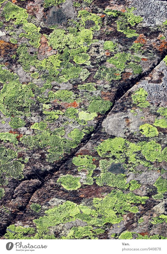 gespaltene Persönlichkeit Natur grün Herbst grau Stein Felsen Moos Furche Spalte Flechten