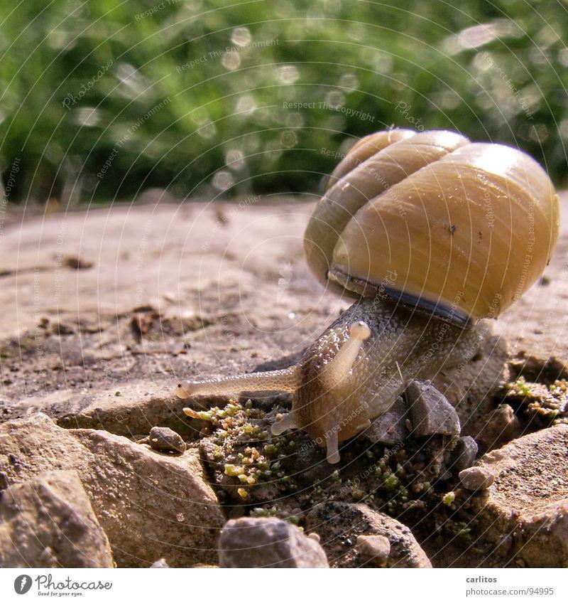 Na Schneckchen, wir zwei .. grün Tier ruhig Haus Gefühle Stein Lebensmittel Haut Geschwindigkeit Ernährung Schnecke tragen Eile Glätte krabbeln Ausdauer