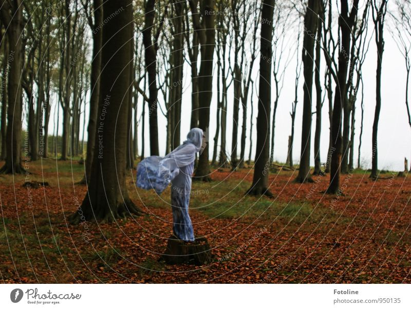 Flying Lady Mensch feminin Jugendliche 1 Umwelt Natur Landschaft Pflanze Herbst Baum Wald natürlich grün rot weiß Geister u. Gespenster Gespensterwald Umhang