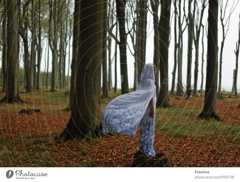 Warten! Mensch feminin Junge Frau Jugendliche 1 Umwelt Natur Landschaft Erde Herbst Pflanze Baum Wald kalt natürlich weiß Umhang Kleid kleidsam Kapuze wehen