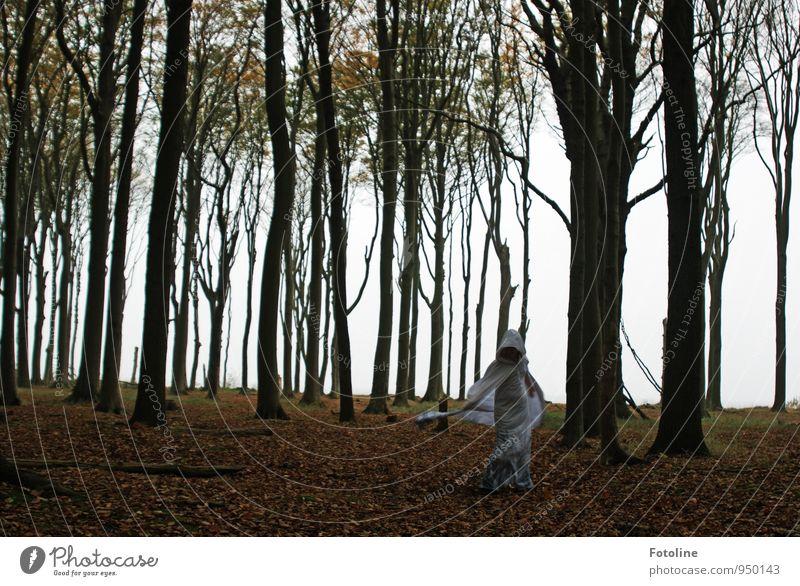 Geist-reich Mensch Natur Jugendliche Pflanze Baum Junge Frau Landschaft dunkel Wald Umwelt Herbst feminin natürlich Geister u. Gespenster Buchenwald
