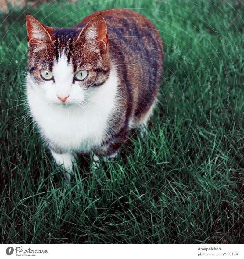 ::14-38:: Umwelt Natur Landschaft Frühling Sommer Gras Grünpflanze Garten Park Wiese Tier Haustier Katze Tiergesicht Neugier Interesse Tierhandlung Tierbedarf