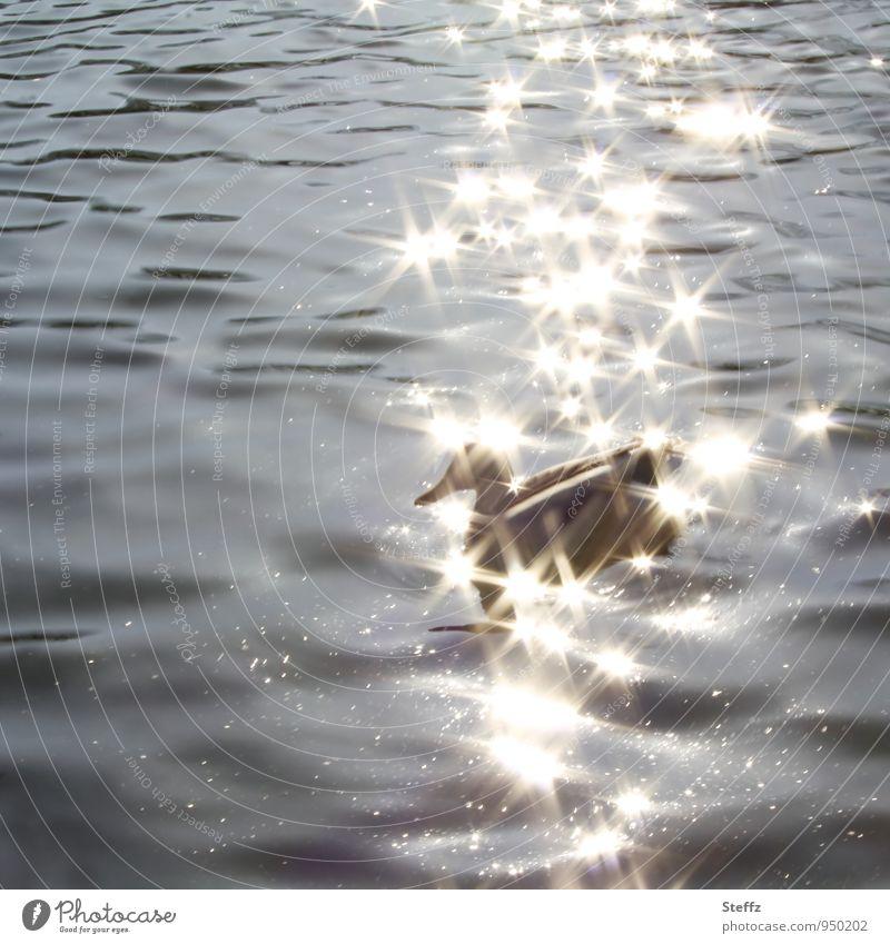 goldene Sterne im Wasser über einer Ente Lichtreflexe Lichtfunken glitzernde Sterne Lichtreflexe im Wasser Lichtsterne leuchten Stern (Symbol) feierlich funkeln