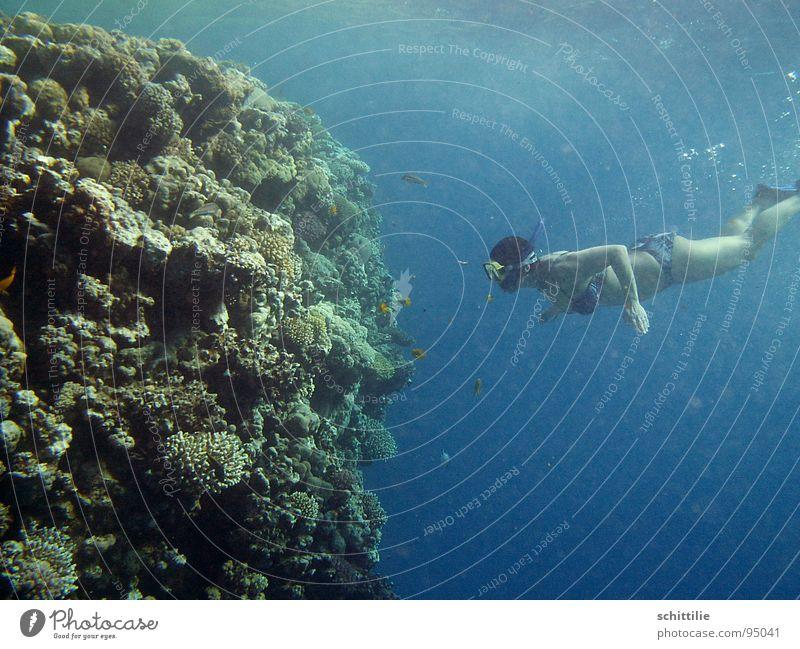 am_Riff Taucher Frau grün Korallen Sport Freizeit & Hobby Wasser Schrocheln blau Stein Fisch Schwimmhilfe tief Druck