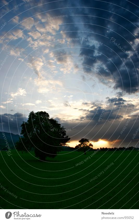 rain is comming over us Natur Himmel weiß Baum Sonne grün blau schwarz Wolken dunkel Wiese grau Landschaft hell Erde Ewigkeit