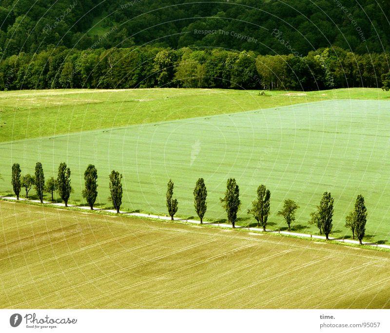 Street Life Natur grün Baum Sommer Einsamkeit Wald Straße Wiese Landschaft braun Horizont Feld Fernweh Anordnung Heimat gestalten
