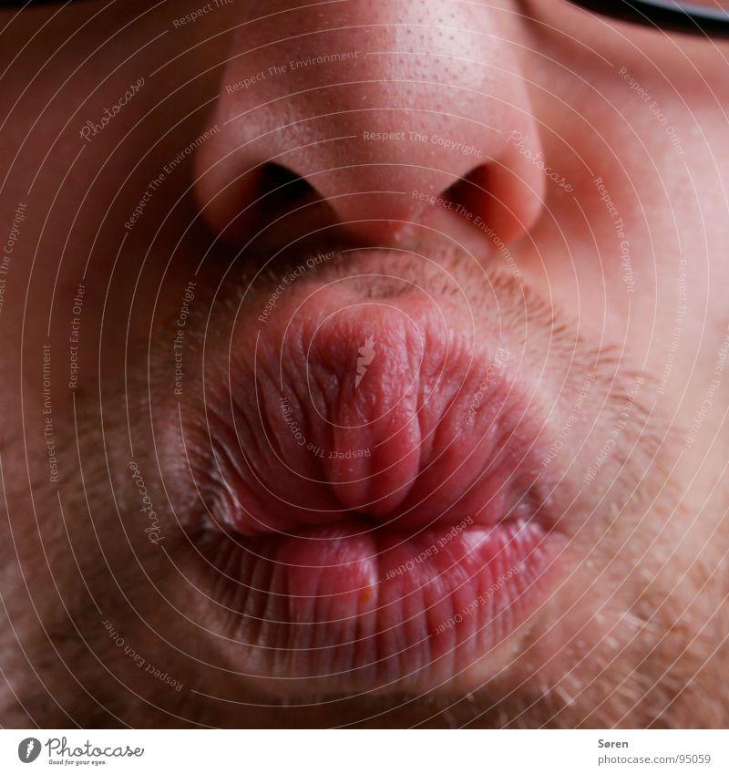 Dicker Kuss Gesicht Mund lustig Nase Lippen Küssen Bart frech Grimasse Kussmund Verzerrung Dreitagebart schmollen mündlich Schmatz Knollnase