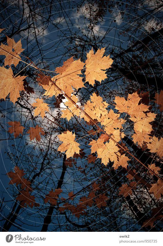 Himmel voller Blätter Natur blau Pflanze Baum Landschaft Blatt Wolken Umwelt Herbst oben orange Idylle Vergänglichkeit Wandel & Veränderung viele
