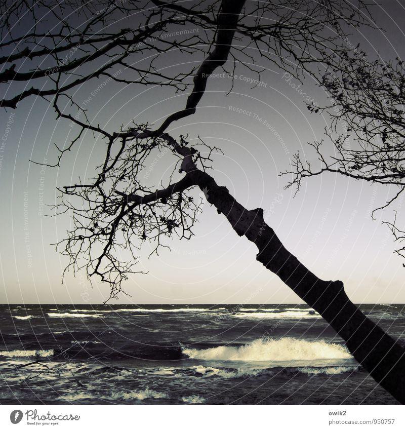 Guten Morgen, Ostsee Umwelt Natur Landschaft Wasser Wolkenloser Himmel Horizont Klima Schönes Wetter Wind Baum Wildpflanze Ast Zweige u. Äste Wellen Küste