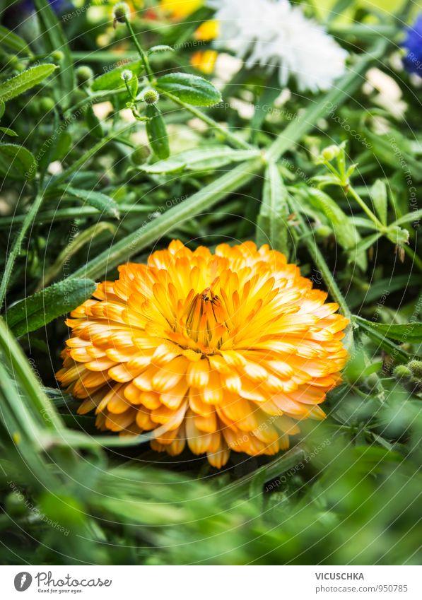 Blumendekoration mit Ringelblume Natur Pflanze Sommer Blume gelb Wiese Stil Garten Park Freizeit & Hobby Dekoration & Verzierung Design Blumenstrauß Alternativmedizin Heilpflanzen Spa