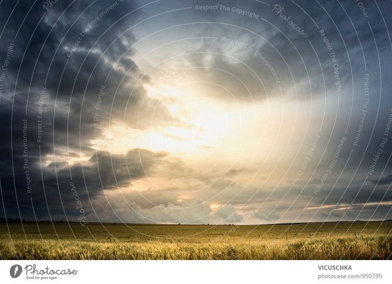 Stürmischer Himmel über Weizenfeld Sommer Natur Landschaft Pflanze Luft Wolken Gewitterwolken Horizont Sonne Sonnenfinsternis Sonnenlicht Herbst Wetter