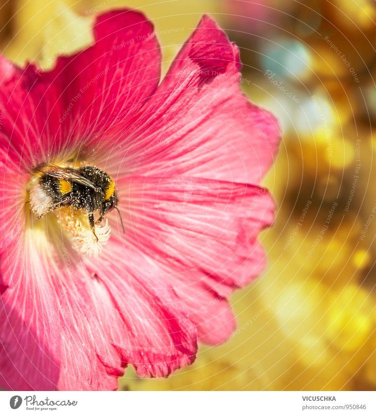 Hummel sammelt Pollen in roter Blume Natur Pflanze Sommer Tier gelb Leben Herbst Blüte Frühling Stil Garten Lifestyle Freizeit & Hobby Design Schönes Wetter