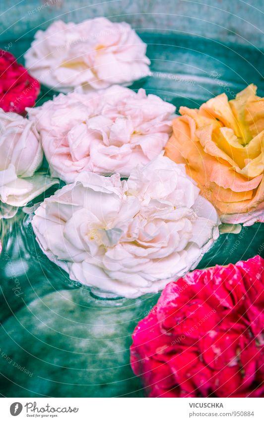 Rose Blumen im Wasser Stil Design Freizeit & Hobby Garten Dekoration & Verzierung Natur Pflanze rosa rot gelb mehrfarbig Außenaufnahme Farbfoto Nahaufnahme Tag