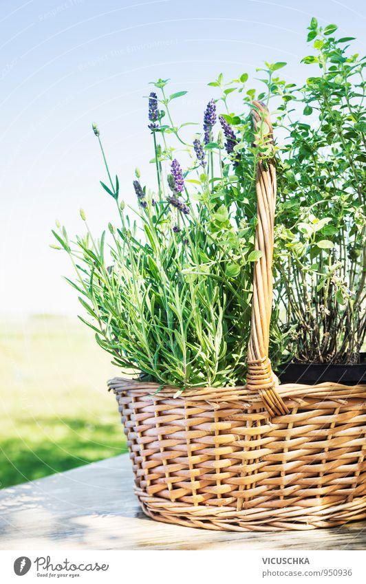 Lavendel Korb auf Gartentisch Natur Pflanze Himmel (Jenseits) Sommer Frühling Stil Hintergrundbild Holz Lifestyle Design Tisch Kräuter & Gewürze Blumenstrauß