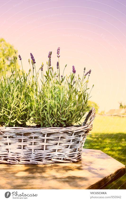 Lavendel in alten Korb auf Tisch im Garten Himmel Natur Pflanze weiß Sommer Sonne Erholung ruhig Herbst Frühling Stil Park Lifestyle Freizeit & Hobby Design