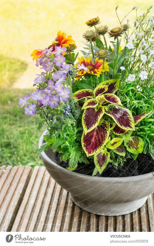 Topf mit Blumen auf der Terrasse im Garten Natur Pflanze Sommer Herbst Frühling Holz Lifestyle Freizeit & Hobby Erde Design Dekoration & Verzierung ästhetisch