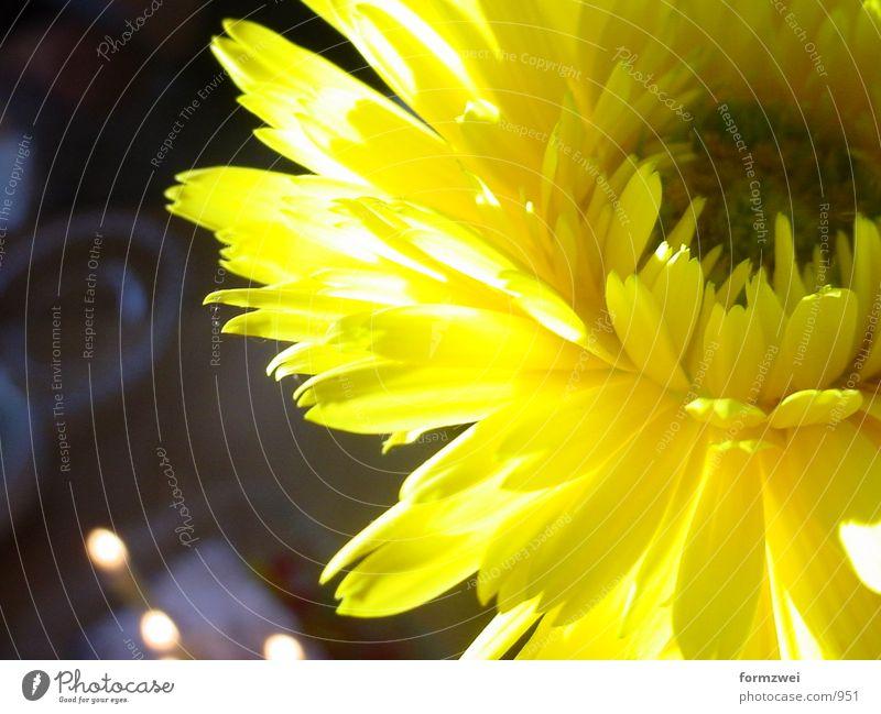 Blume gelb Dinge