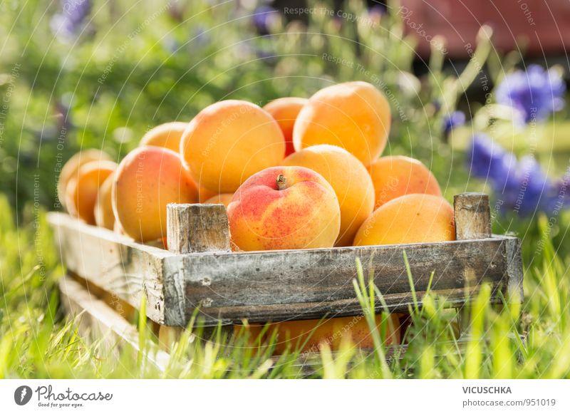 Alte Holzkiste mit Aprikosen im Garten Lebensmittel Frucht Bioprodukte Vegetarische Ernährung Diät Saft Lifestyle Gesunde Ernährung Sommer Natur gelb Stil