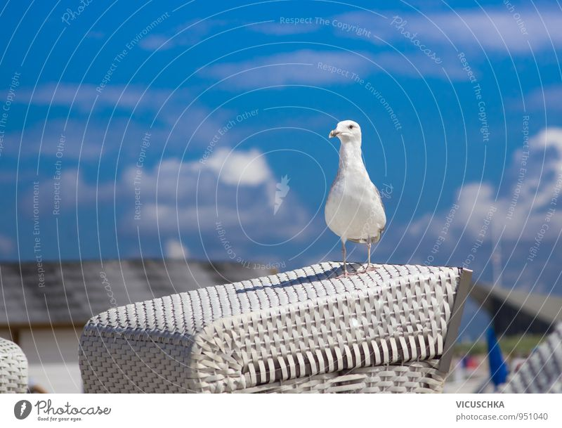Möwe auf weißem Strandkorb Himmel Natur Ferien & Urlaub & Reisen blau Sommer Meer Wolken Tier Leben Frühling Hintergrundbild See Vogel Deutschland Lifestyle