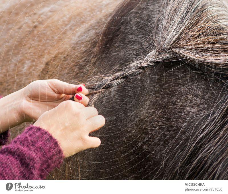 mähne einflechten Mensch Frau Natur Sommer Hand Tier Erwachsene Haare & Frisuren braun Lifestyle Freizeit & Hobby Idylle Pferd Zopf Mähne Reiten