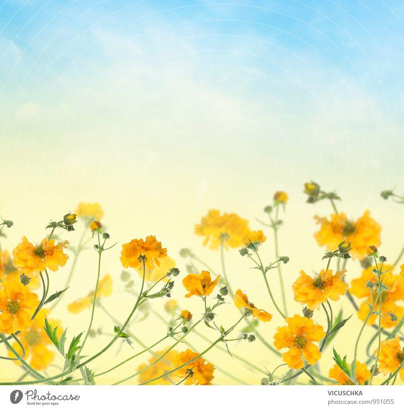 Blumen Hintergrund mit gelben Blüten am blauen Himmel Natur Pflanze Sommer Wolken Frühling Hintergrundbild Garten Park Design Schönes Wetter Blumenstrauß Rahmen