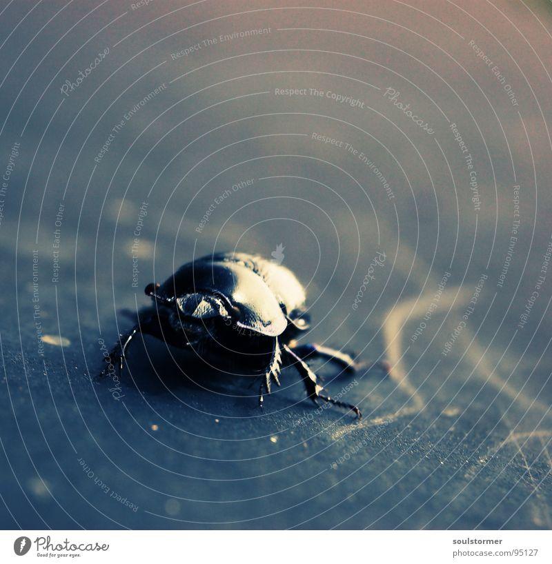 lauf Panzer, lauf......... Insekt Flucht gepanzert Dämmerung Panik Cross Processing Makroaufnahme Nahaufnahme Angst Käfer laufen Beine Arme Flügel digital-cross