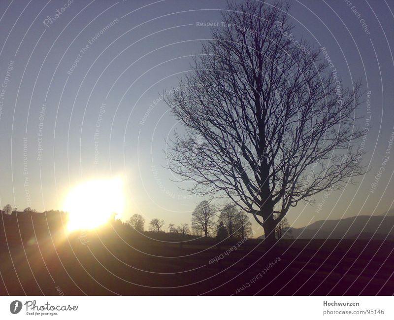 The Sunset Himmel Sonne Baum kalt Herbst Baumkrone herbstlich laublos Schladming