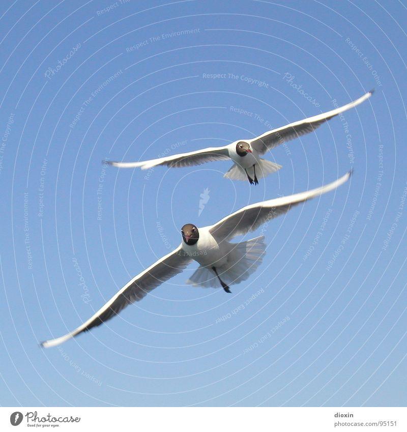 Einbein´s Rückkehr Natur Himmel weiß blau Tier Leben Freiheit Luft Vogel Deutschland Wind Umwelt fliegen Fröhlichkeit Feder Flügel