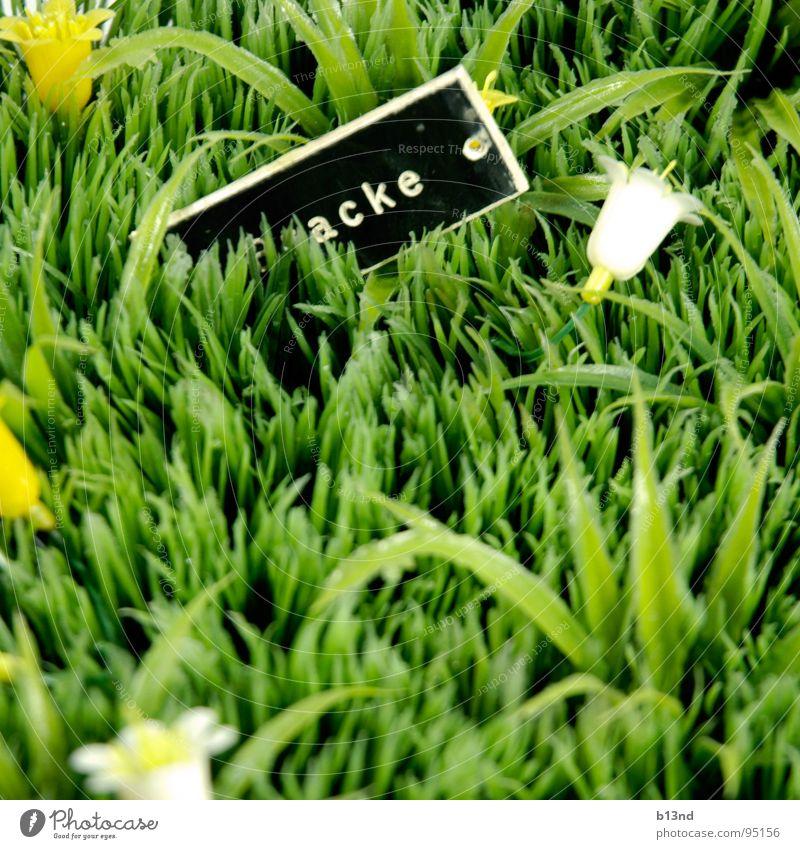 *acke Wiese Gras Blume Blüte Namensschild grün schwarz weiß gelb Stillleben Frühling Rasen Pflanze Schilder & Markierungen Statue Kunststoff gestellt Kitsch alt