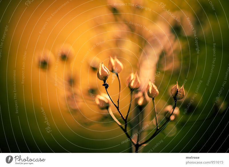 aufrecht Natur Pflanze grün Erholung ruhig Wald Umwelt gelb Leben Herbst Blüte Stimmung träumen gold leuchten Sträucher