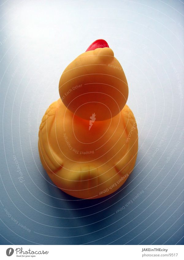 Quack_von_Hinten gelb obskur Ente Badeente Farbenspiel Rückseite