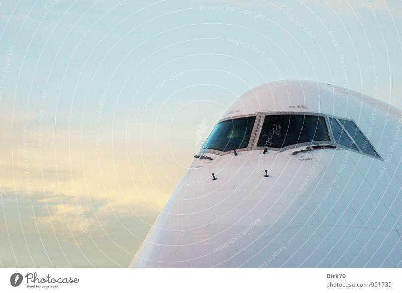 Dicker Brummer Himmel Ferien & Urlaub & Reisen blau weiß Wolken Ferne schwarz gelb grau fliegen glänzend Kraft Luftverkehr Verkehr warten groß