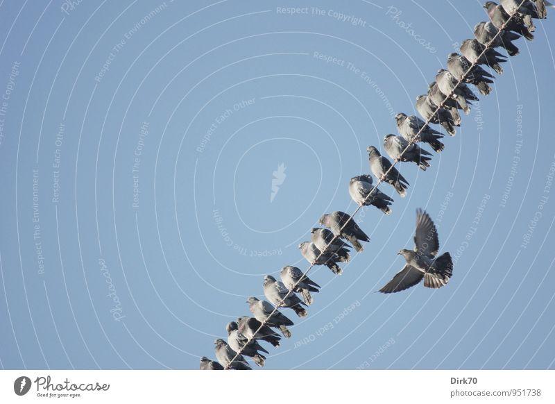 Nachzügler, Außenseiter? Technik & Technologie Energiewirtschaft Wolkenloser Himmel Schönes Wetter Tier Wildtier Vogel Taube Haustaube Tiergruppe Schwarm
