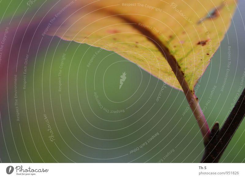 Blatt Natur Pflanze Herbst Blühend ästhetisch authentisch einfach elegant natürlich gelb grün rosa Stimmung Gelassenheit geduldig ruhig einzigartig harmonisch