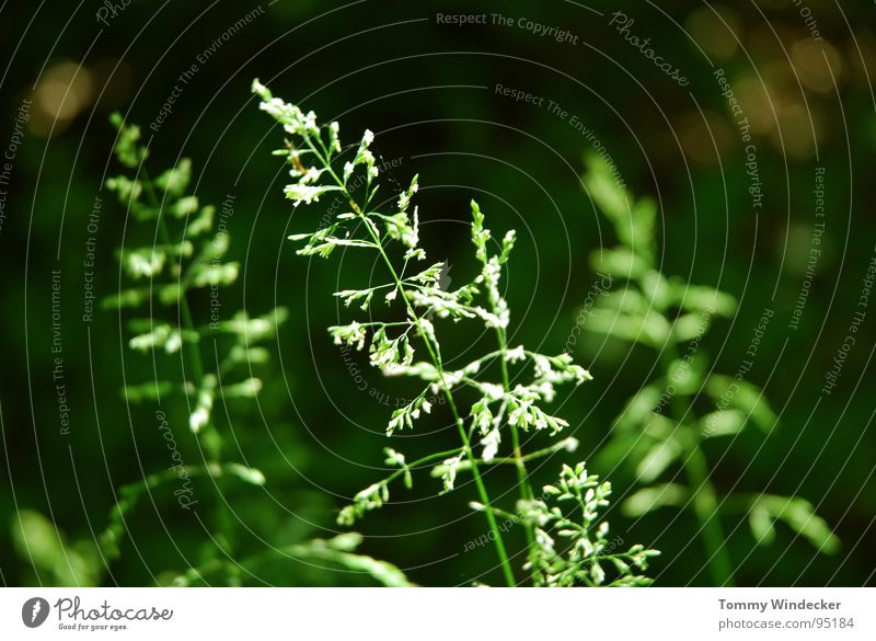 Sommerwald Natur weiß grün schön Pflanze Sommer Blume Farbe Landschaft Wärme Gras Frühling Blüte Garten glänzend nass