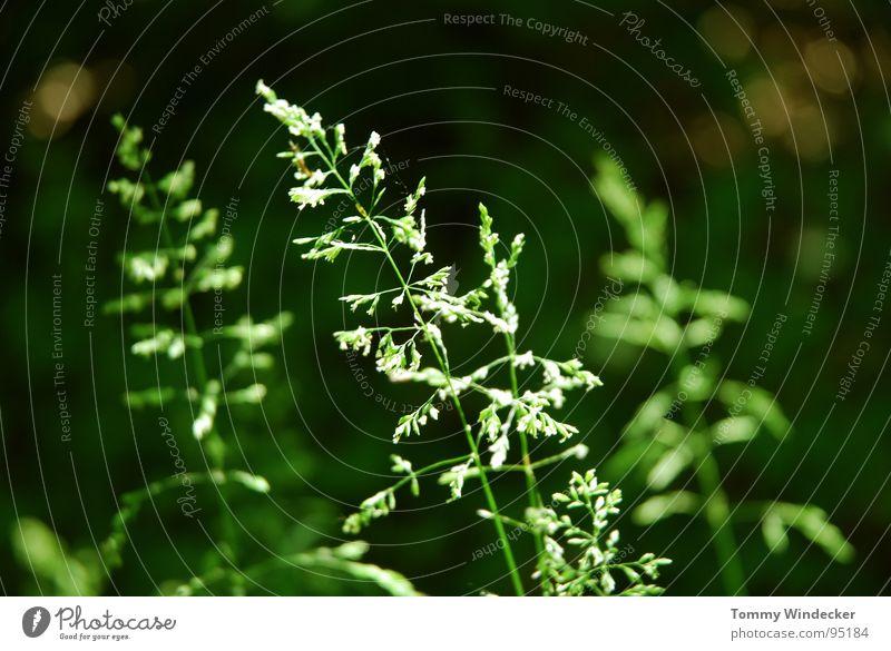 Sommerwald Natur weiß grün schön Pflanze Blume Farbe Landschaft Wärme Gras Frühling Blüte Garten glänzend nass