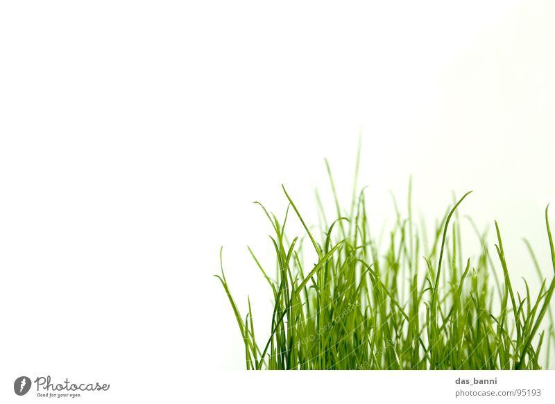 clean gras - Raum ist Luxus! Gras Halm pflanzlich organisch grasgrün Grasbüschel Vor hellem Hintergrund