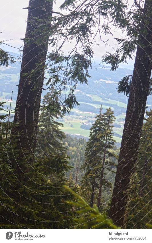 Shake My Tree Umwelt Natur Landschaft Pflanze Himmel Wolken Sommer Wetter Nebel Baum Sträucher Grünpflanze Wildpflanze Wald Berge u. Gebirge Stein Holz wandern