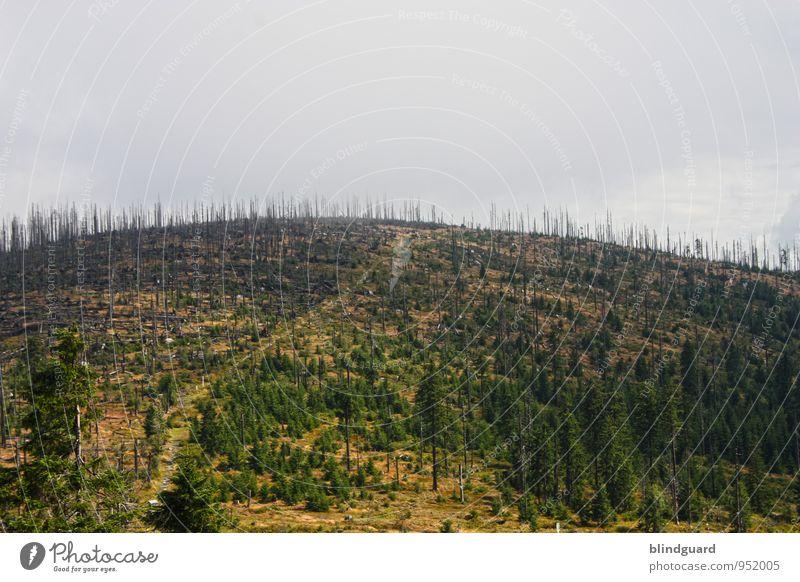 Over The Hills And Far Away Himmel Natur Pflanze grün Sommer Baum Landschaft Wolken schwarz Wald Umwelt Berge u. Gebirge Holz Stein braun Felsen