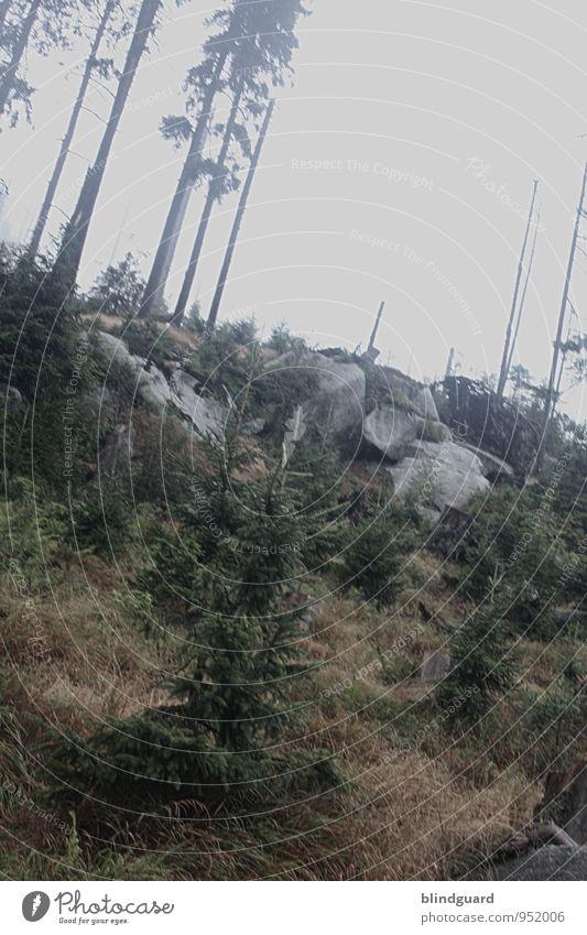 Night in the Wilderness Ferien & Urlaub & Reisen Ausflug Abenteuer Freiheit Sommer Berge u. Gebirge wandern Umwelt Natur Landschaft Pflanze Erde Luft Himmel