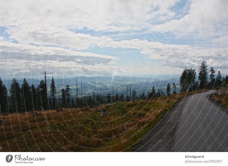 Street Of Dreams Himmel Natur Ferien & Urlaub & Reisen Pflanze schön Sommer Landschaft Wolken Ferne Wald Umwelt Berge u. Gebirge Straße Freiheit Felsen