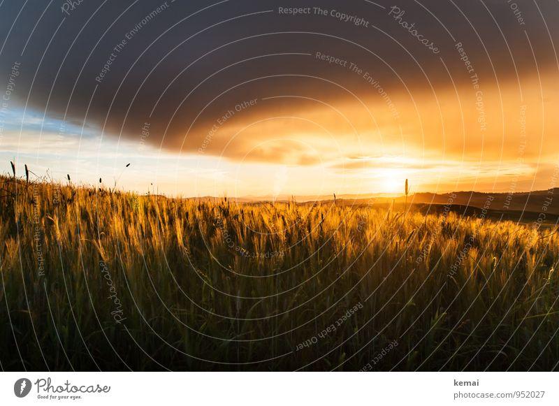 Goldene Felder Himmel Natur Pflanze schön Sommer Sonne Landschaft ruhig Wolken Umwelt Wärme Gefühle gold Schönes Wetter Warmherzigkeit